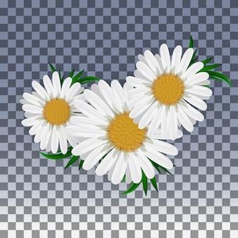 透明に分離されたカモミールの花。図