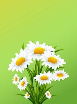 緑の背景にカモミールの花とグリーティングカード