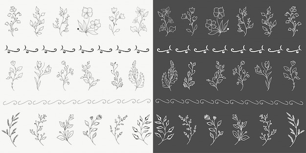 Рисованные ботанические элементы
