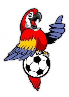 赤いコンゴウインコの鳥がサッカーボールの上に立つ