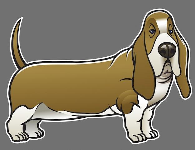 バセットハウンド犬