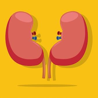 腎臓フラットアイコンが黄色の背景に分離されました。健康な人間の内臓の医療イラスト。