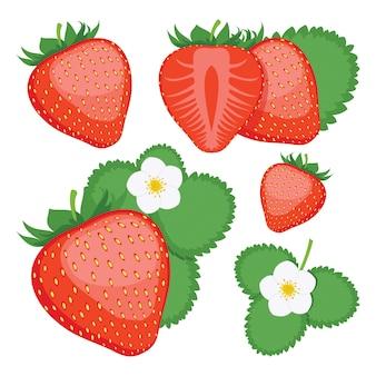 イチゴ。全体とスライスしたイチゴの果実のコレクション