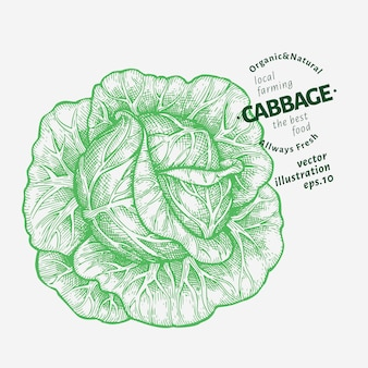 キャベツのイラスト。手描き野菜のイラスト。