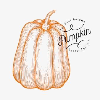 かぼちゃのイラスト。手描きベクトル野菜イラスト。刻まれたスタイルのハロウィーンまたは感謝祭