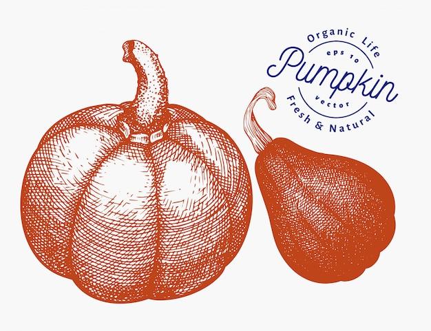 カボチャのイラストセット。手描きベクトル野菜イラスト。刻まれたスタイルのハロウィーンまたは感謝祭