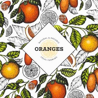 Цитрусовые шаблон. ручной обращается векторная иллюстрация цвета фруктов