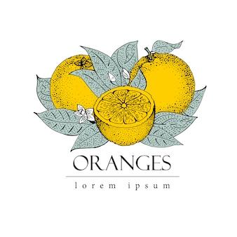 Вектор ручной обращается логотип шаблон с листьями и оранжевыми фруктами. старинные иллюстрации ретро этикетка