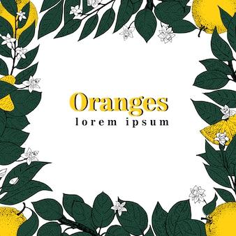 ベクトル手描きの葉とオレンジ色の果物のフレーム。