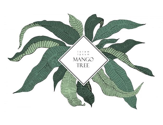 Манго дерево старинные иллюстрации. ботанический манго фрукты иллюстрации. листья.
