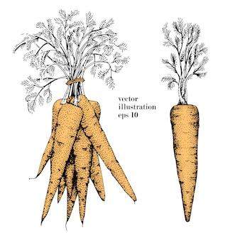 ニンジン手描きの背景イラストセット。ビンテージ野菜刻まれたスタイルオブジェクト。メニュー、ラベル、農産物市場に使用できます