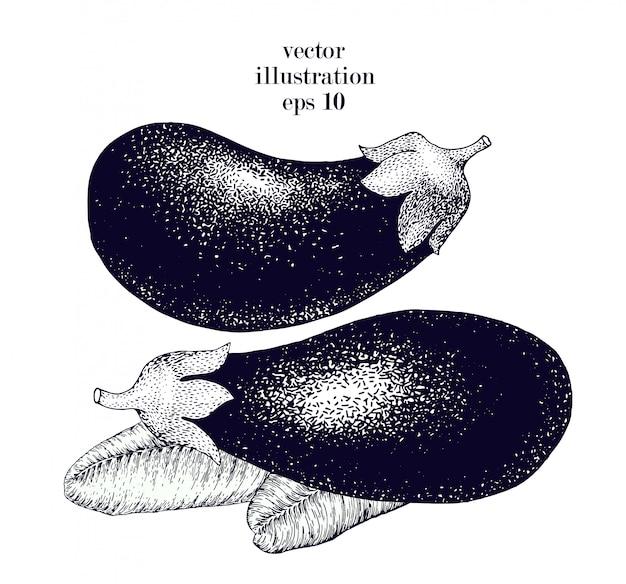 茄子手描きベクトルイラストセット。ビンテージ野菜刻まれたスタイルオブジェクト。メニュー、ラベル、農産物市場に使用できます