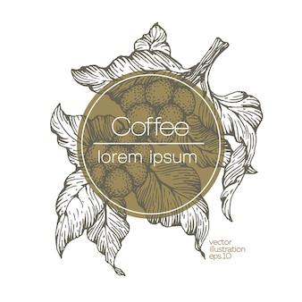 Кофе в зернах векторные иллюстрации.