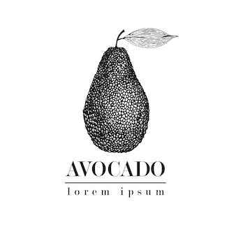 ベクトル手描きアボカド。熱帯夏フルーツビンテージスタイルのイラスト。詳細な食品図面。ラベル、ポスター、印刷に最適です。ロゴのテンプレート。