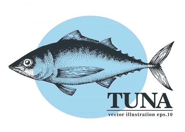 マグロの魚の手描きの背景イラスト。