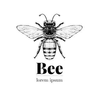 ベクトル手描き蜂イラスト。レトロなスタイルのロゴのテンプレート。