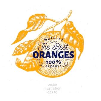 オレンジ色の枝のイラスト。手描きベクトルフルーツイラスト。刻まれたスタイルレトロな柑橘類のイラスト。