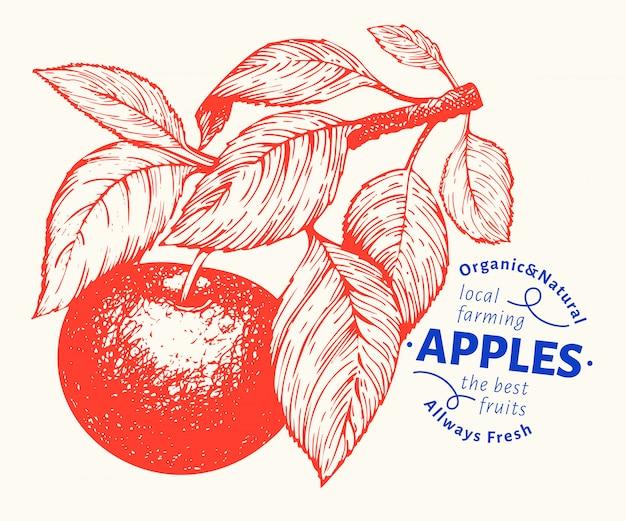 リンゴの枝のイラスト。手の描かれたベクターガーデンフルーツイラスト。刻まれたスタイルのフルーツ。ヴィンテージの植物図。