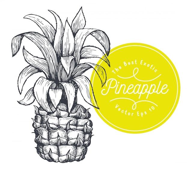 パイナップル。手描きベクトルトロピカルフルーツイラスト。刻まれたスタイルのアナナスの実。ヴィンテージの植物図。