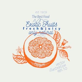 オレンジ色のイラスト。手描きベクトルフルーツイラスト。刻まれたスタイルレトロな柑橘類のイラスト。
