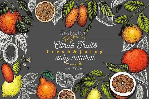 柑橘系のデザイン手描きのフルーツイラストレーション