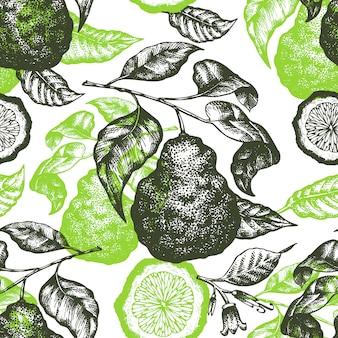 ベルガモット支店のシームレスパターン。手描きベクトルフルーツイラスト。刻まれたスタイルレトロな柑橘類。