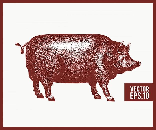 ベクトル手描き黒豚シルエットのイラスト。レトロな彫刻風家畜のスケッチをスケッチします。