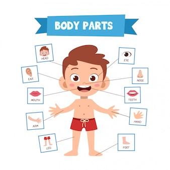 Части человеческого тела