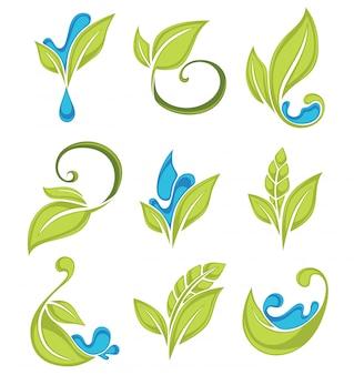 緑の葉の植物と水滴の新鮮なコレクション