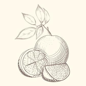 オレンジ色の果物のスケッチ。オレンジのスライス。エキゾチックなトロピカルフルーツ。