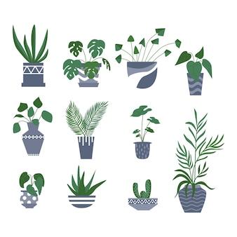 Экзотическое тропическое комнатное растение в цветочном горшке. плоские векторные иллюстрации