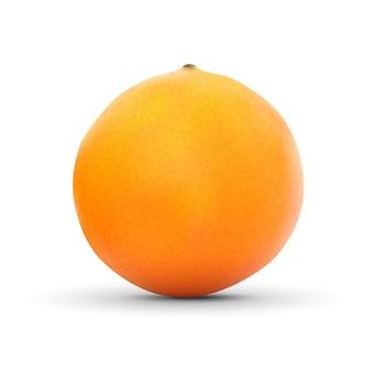 白で隔離される現実的なオレンジ
