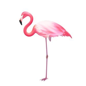 Реалистичный розовый фламинго на одной ноге