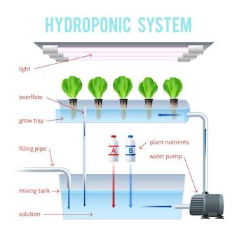 水耕栽培色のインフォグラフィック