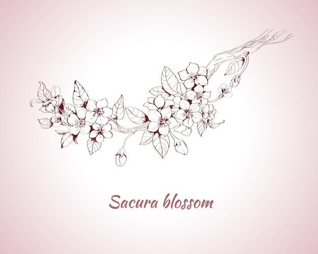Эскиз цветения сакуры