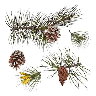 松の枝のカラー印刷