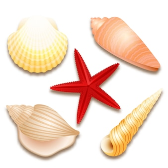 Набор ракушек и красная морская звезда