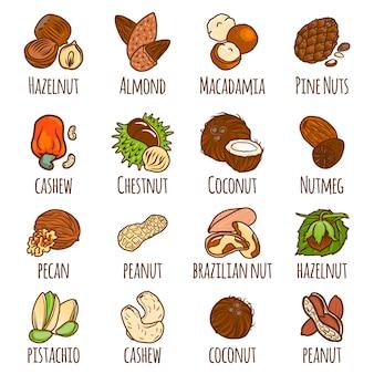 Набор ореховых элементов, стиль рисованной