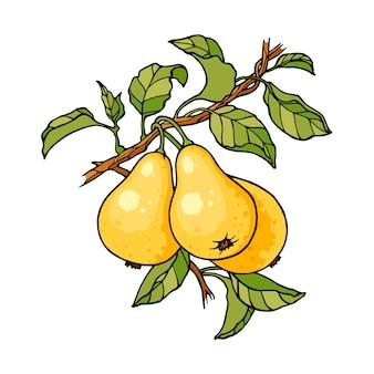 梨の木の枝のカラースケッチの彫刻