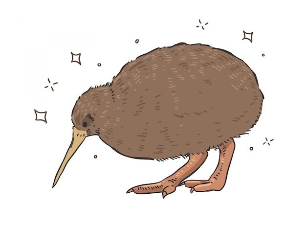 Редкая милая птичка, эндемичная для новой зеландии