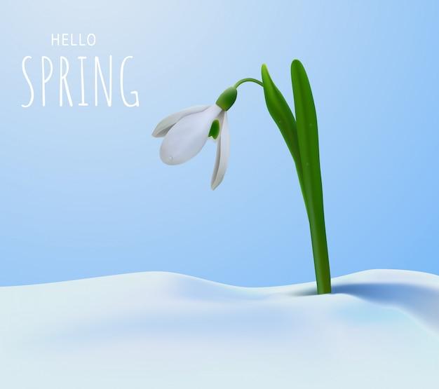 Привет весна и подснежник.