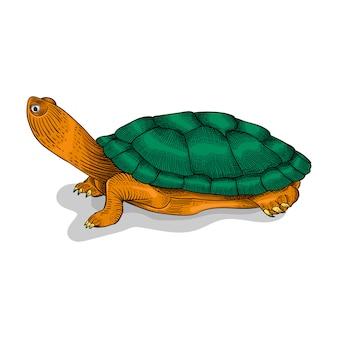 Рисованная черепаха