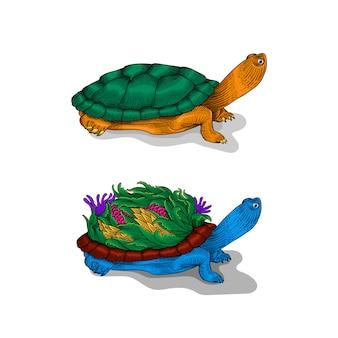Рисованная иллюстрация черепаха