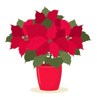 美しいユーフォルビアの顕花植物またはクリスマスの星。フラットスタイルのイラスト。