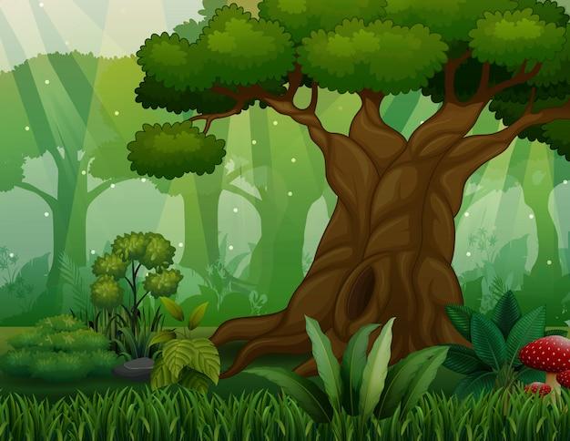 ジャングルを背景に大きな木