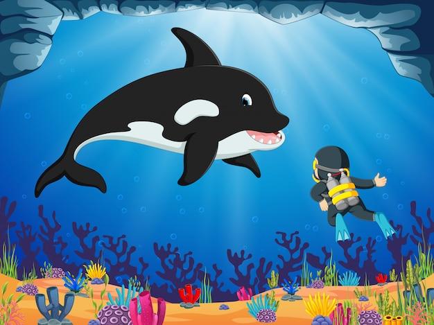 勇敢なダイバーは青い海の下で大きなイルカを探しています