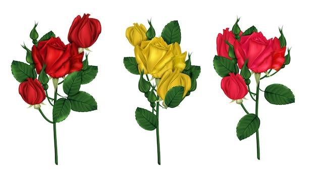 흰색 배경에 고립 된 빨간색, 노란색 및 주홍 장미의 밝은 세트