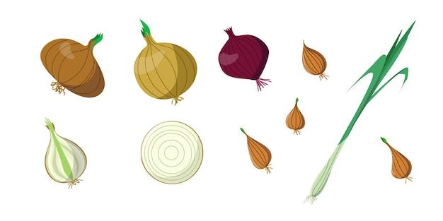Яркий векторный набор красочного лука и зеленого лука. свежий овощ мультфильма, изолированные на белом фоне. иллюстрация используется для журнала, книги, плаката, открытки, обложки меню, веб-страниц.