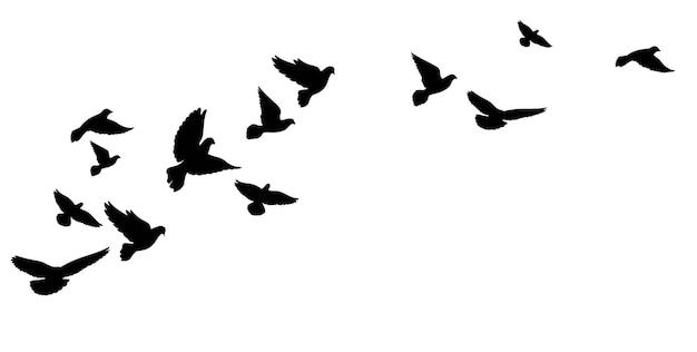 飛んでいる鳥、鳩の群れ。黒のシルエット。ベクトルイラスト