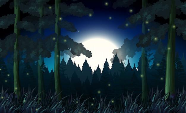 어두운 밤의 숲
